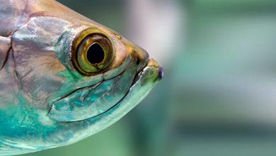La genética es clave para el incremento de la productividad en la acuicultura mexicana