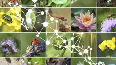 Ante la polémica de Ley General de Biodiversidad, ONGs buscan derogar esta propuesta que, asumen, tiene intereses particulares.