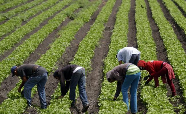 """Los autores del libro """"El Agro y las Áreas Rurales en el México del Siglo XXI"""", explicaron que se trabajan en políticas públicas para retomar al campo como una fuente de ingresos primordial."""