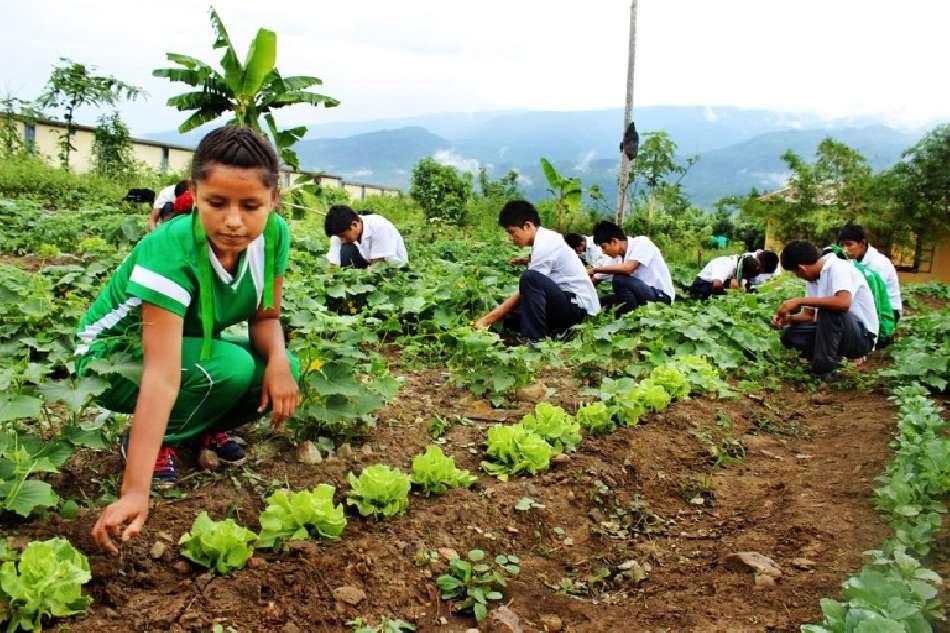Medio ambiente y educación ambiental