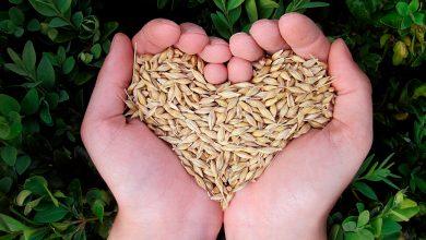 Photo of Hambre cero, el ODS que busca erradicar la desnutrición del mundo
