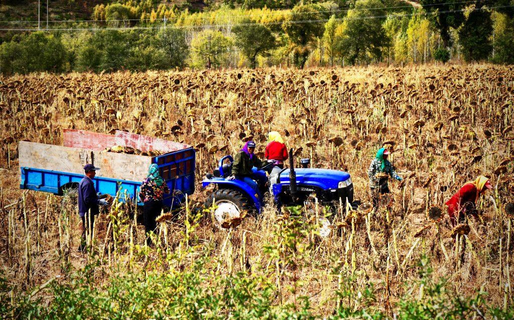 En México existen proyectos que buscan una agricultura sustentable, cuidando el ambiente, con un comercio justo para productores y consumidores