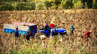 Photo of Agricultura sustentable, responsabilidad de todos