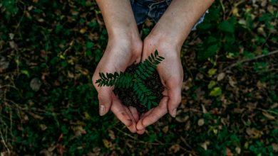 Photo of ¡Proteger la Biodiversidad! #DíaMundialdelMedioAmbiente